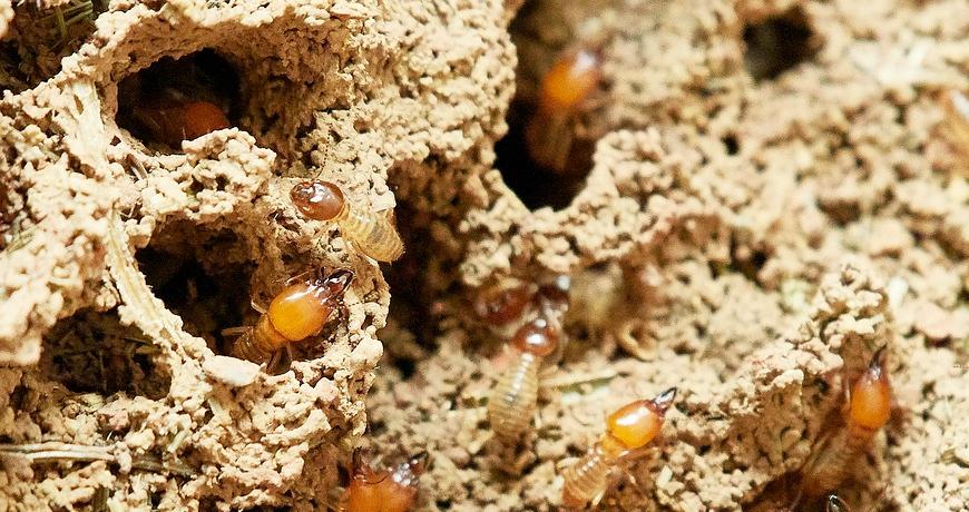 Cómo eliminar las termitas de tus puertas de madera